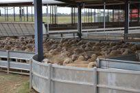 best livestock handling