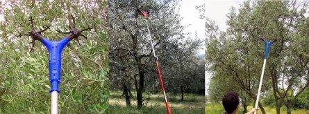 martinò, arnoplast, agevolatori, raccolta, olive
