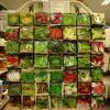 semi, bulbi, sementi, piante
