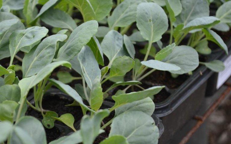 Piante orto pinerolo torino camusso garden punto for Vendita piante orto
