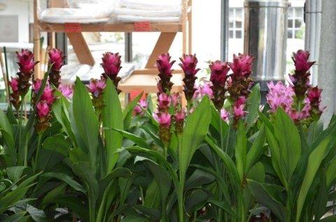 piante da balconi e terrazzi