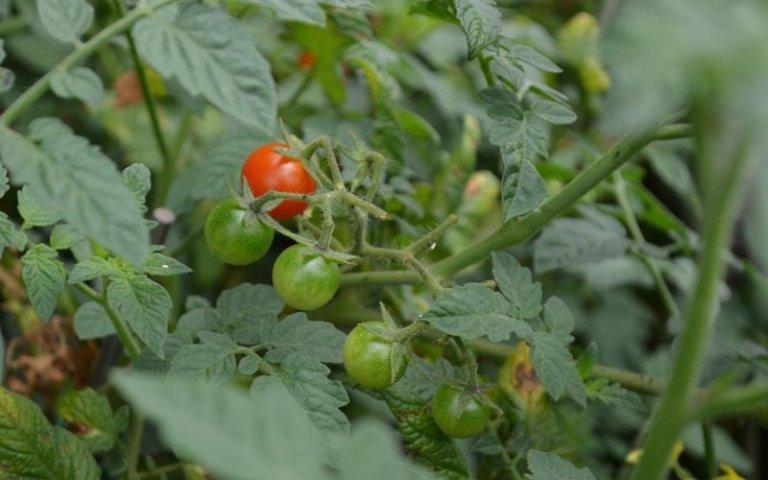 Vendita piante da frutta