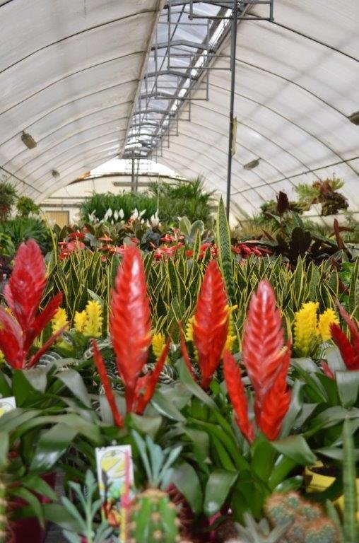 Pianta appartamento pinerolo torino camusso garden - Azalea pianta da interno o esterno ...