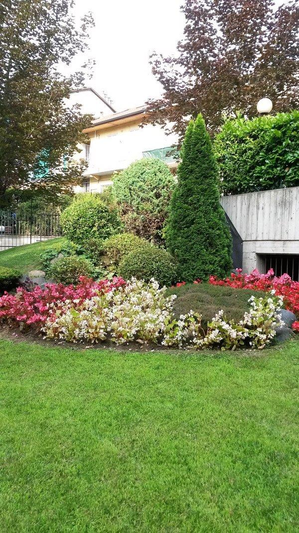 vista di un prato condominiale con un'aiuola di fiori bianchi e rosa,dei cespugli, un albero,della siepe e in lontananza una casa