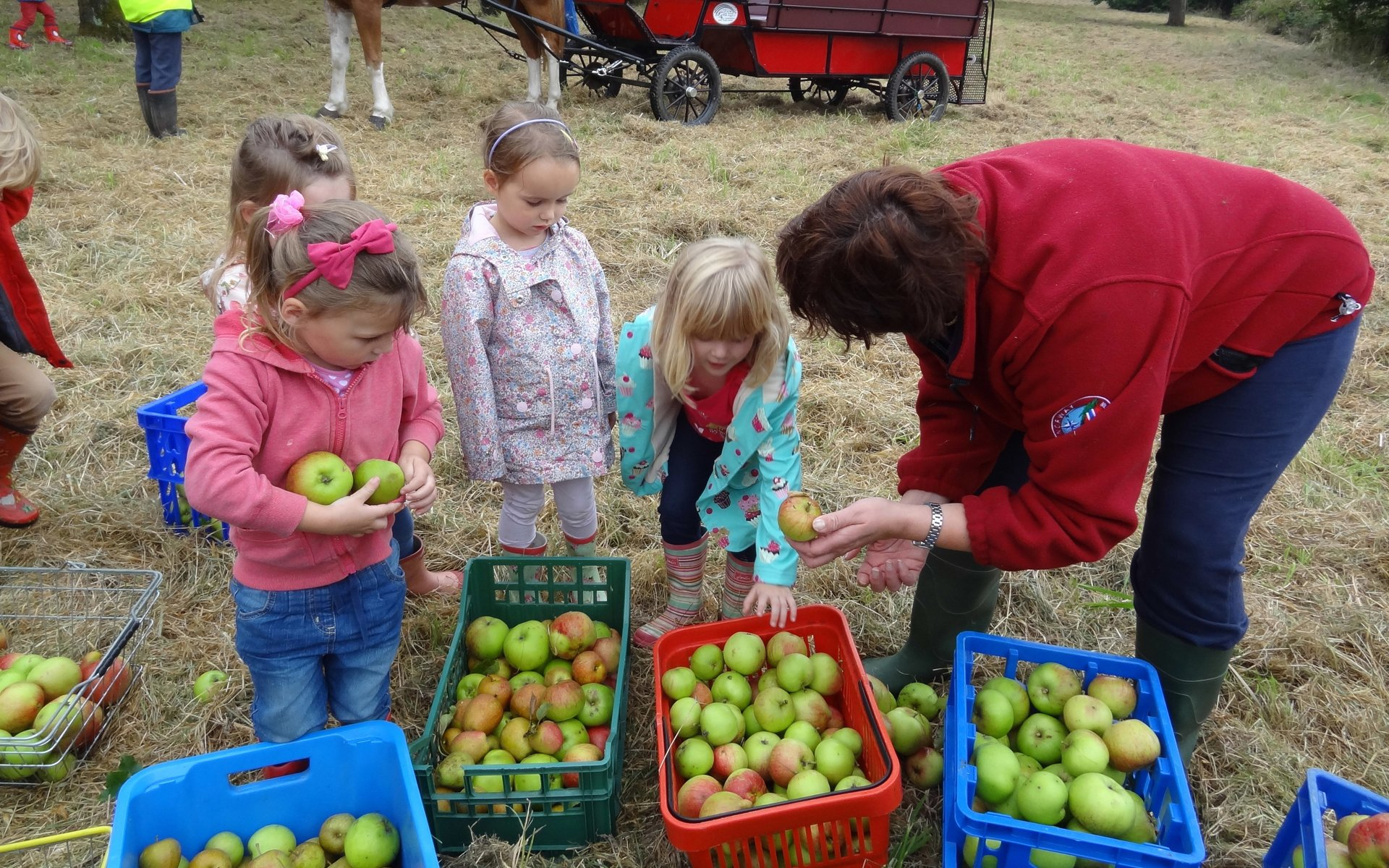children picking fruits