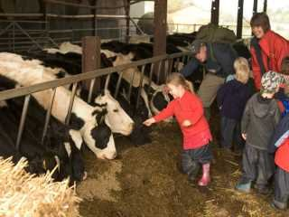 Children in cow shed
