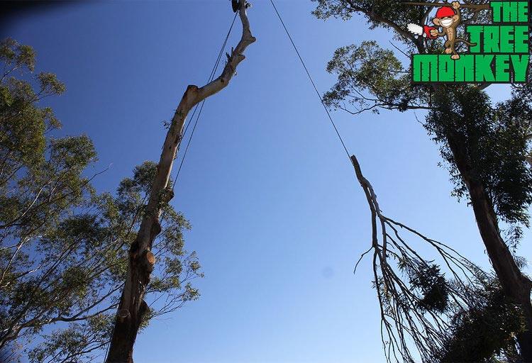 lowering branch