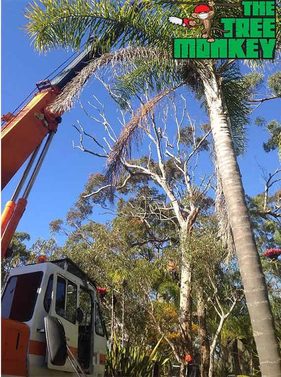 tree by crane