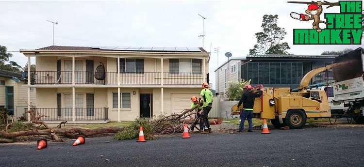 tree removal specialists at work