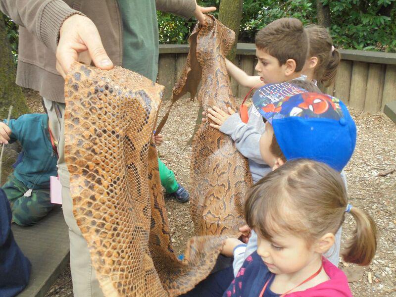 bambini toccano la pelle di pitone