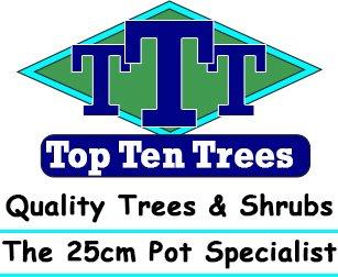top ten trees logo