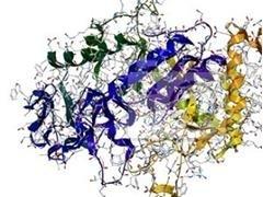 terapia enzimatica