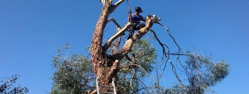 Man on a tree