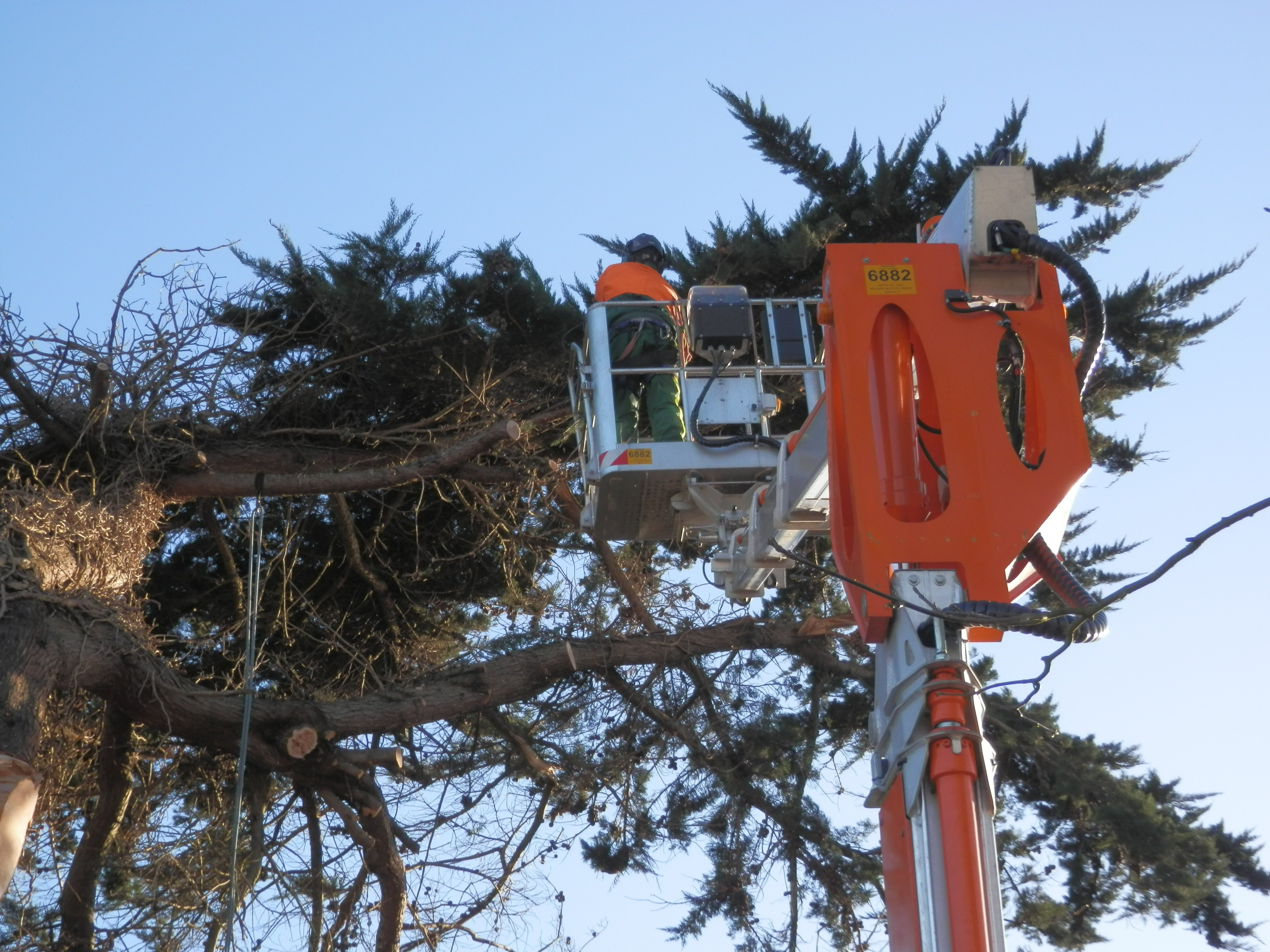 tree reduction