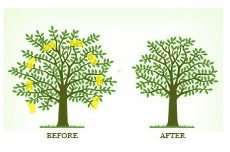 before and after tree maintenance