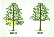 before and after  tree clearing