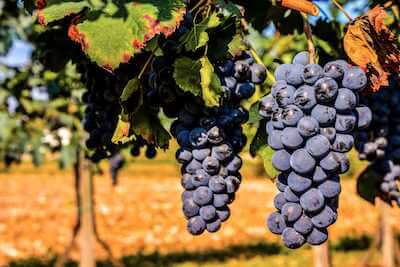temecula wine tours limo