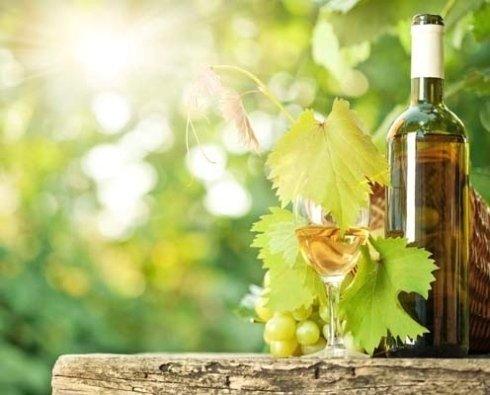 Consigli per la produzione di vino