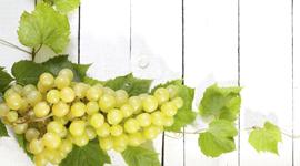 vivai specializzazione viticoltura
