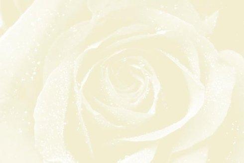 una rosa bianca vista da molto vicino