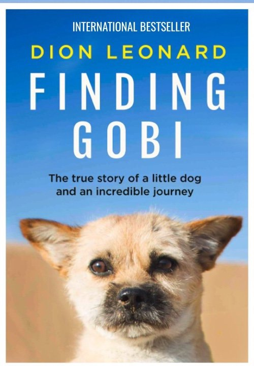 Dion Leonard, Finding Gobi, International Bestseller, Frost Magazine, Book Review, Milly Adams