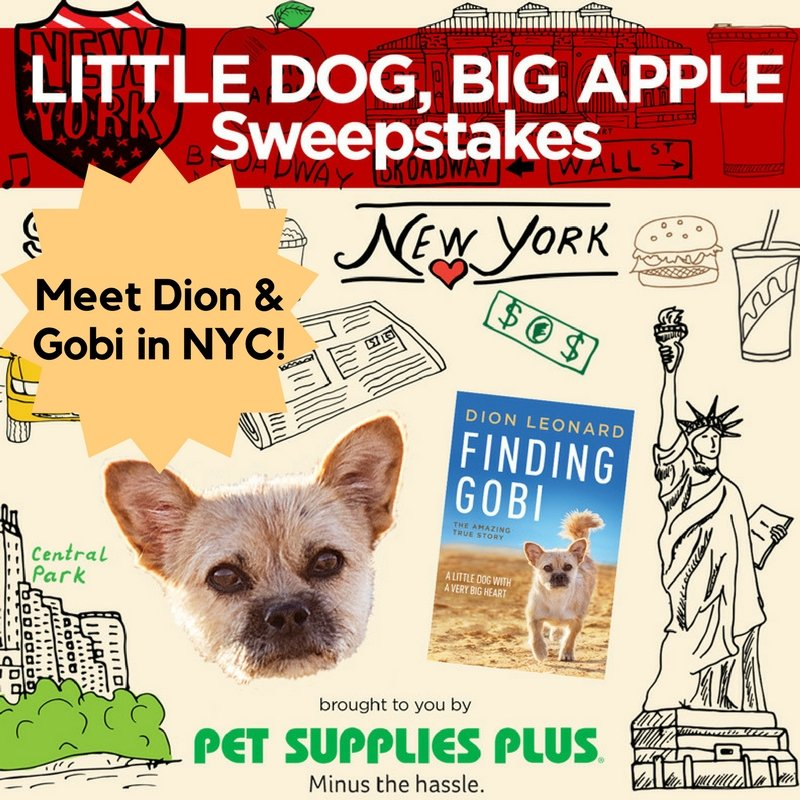 Dion Leonard, Gobi, Finding Gobi, Sweepstakes, New York City, NYC, Trip to New York, Book Tour