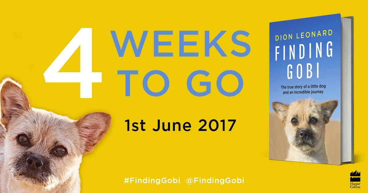 Finding Gobi, Dion Leonard, Finding Gobi book, stray dog, desert dog, runner, desert runner, Gobi March, Gobi race, Gobi dog, Harper Collins, 4 Weeks, Finding Gobi Release
