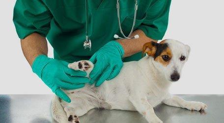 a vet examining a dog's paw