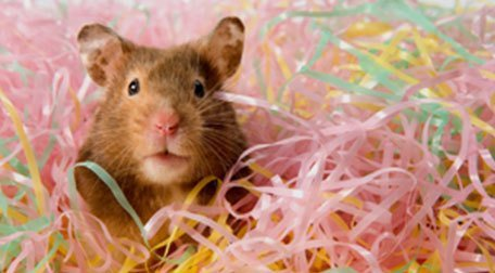 a hamster in a bed of shredded paper