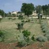 piante ed alberi