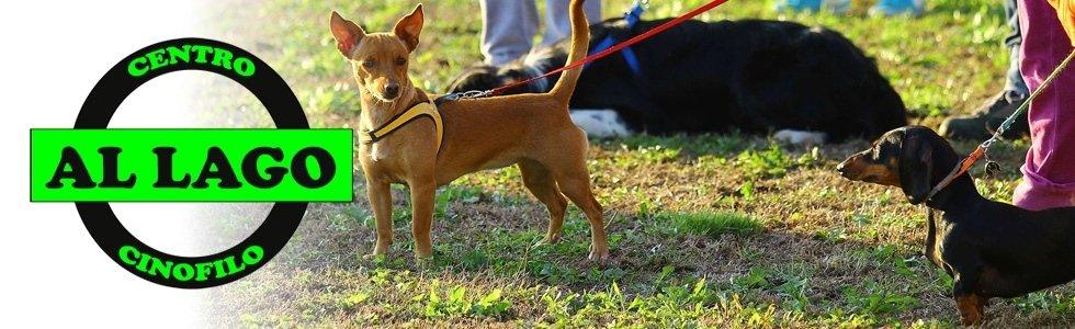 Al Lago allevamento e addestramento cani