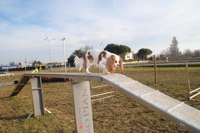 Nuovo percorso agility dog