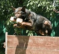 cane utile nel riporto