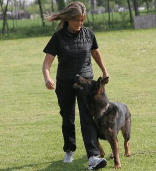 disciplina obedience