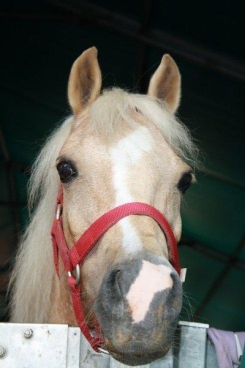 Primo piano cavallo