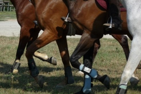 Passeggiata cavalli