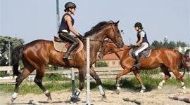 gestione pony, gestione cavalli, gare agonistiche