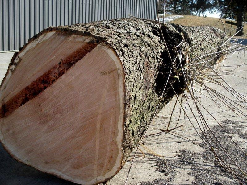 Log with black cherry Burl.