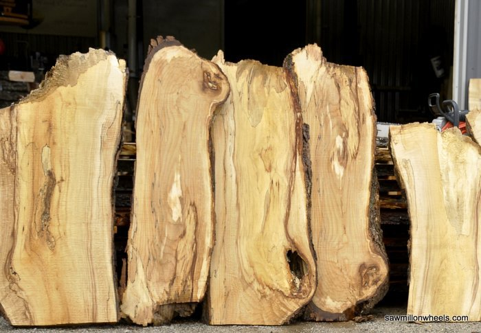 Small live edge Maple wood slabs and end cuts.