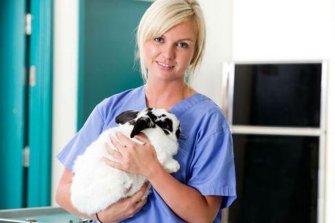 Rabbit with vet at animal hospital in Fairbanks, AK