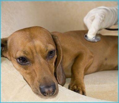 clinica cani