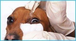 patologie oculari cani