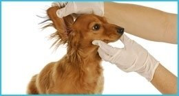 emergenze veterinarie