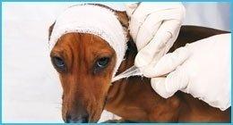 terapie veterinarie
