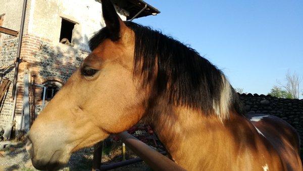 vista laterale dell muso di un cavallo