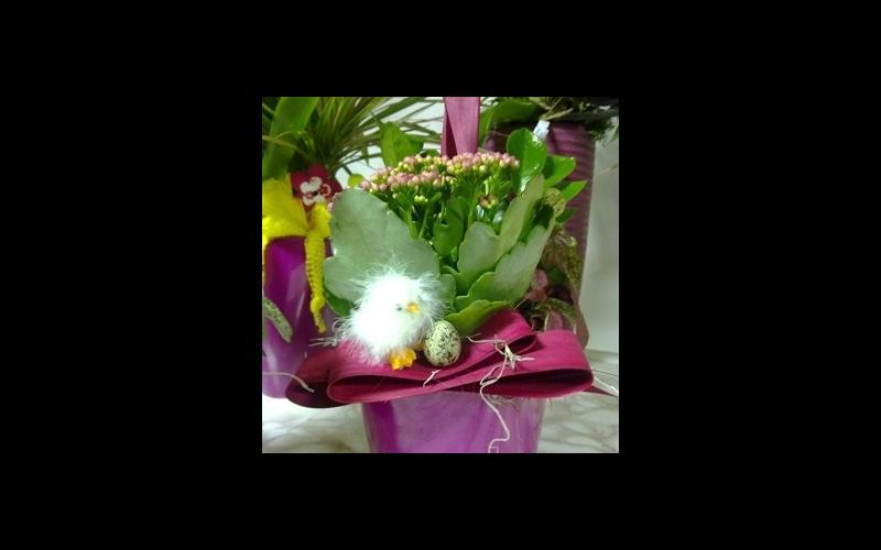 fiori pasqua