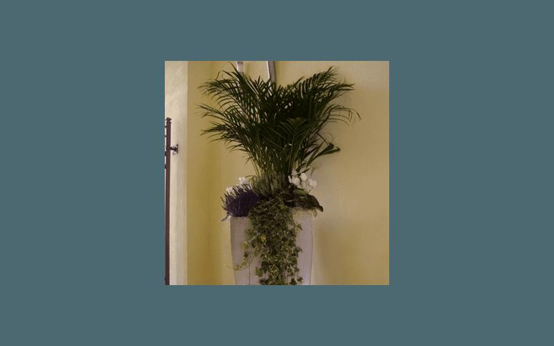 piante interno