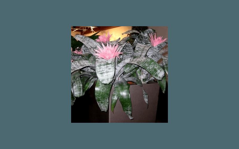 fiori rari