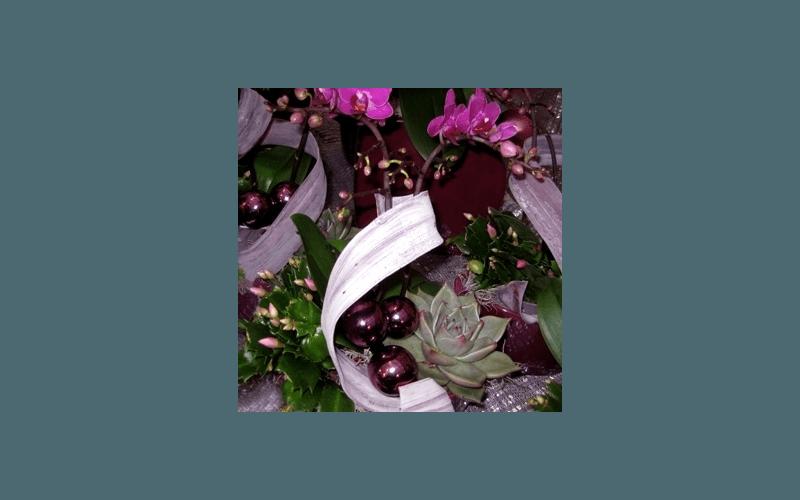 fiori natale