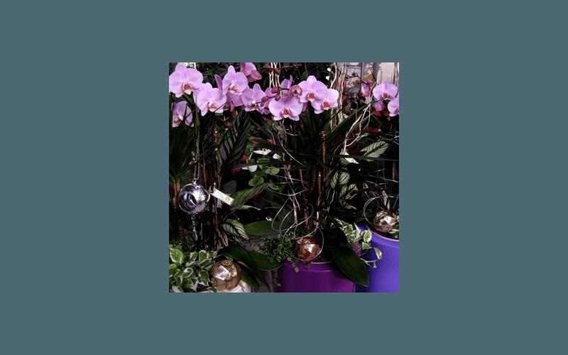 orchidee invernali